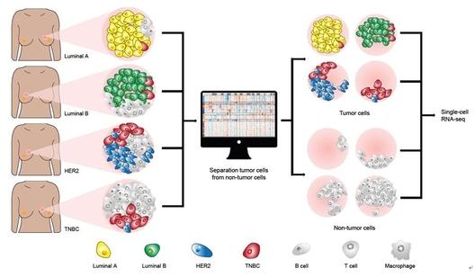 단일세포 전사체 분석을 통해 복제수 변이를 갖는 종양세포를 비종양세포로부터 구분하고 개별 세포의 특징을 분석했다./ 삼성서울병원 제공