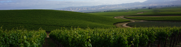 미국 캘리포니아 카멜로드 파노라마 빈야드 포도밭 풍경