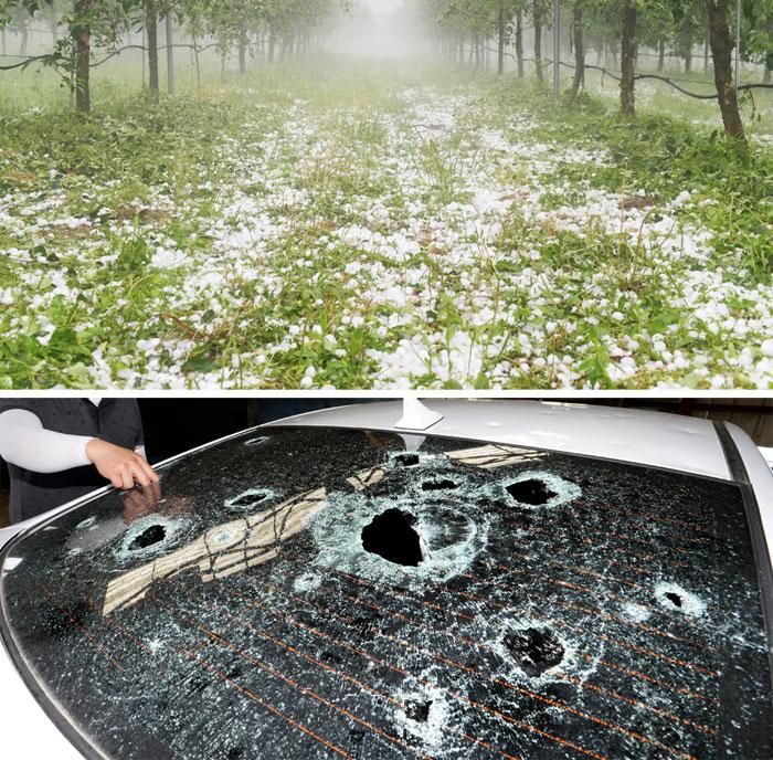 우박폭격 맞은 사과밭, 구멍 숭숭 뚫린 車 유리
