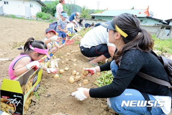 충북 괴산군의 특산품인 감자를 알리기 위한 축제가 16∼17일 감물면사무소 일원에서 열린다.