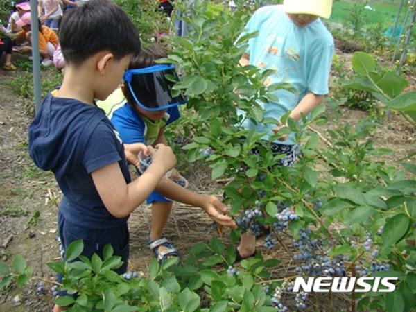 '주말 나들이 영동 금강모치마을 블루베리 축제로'