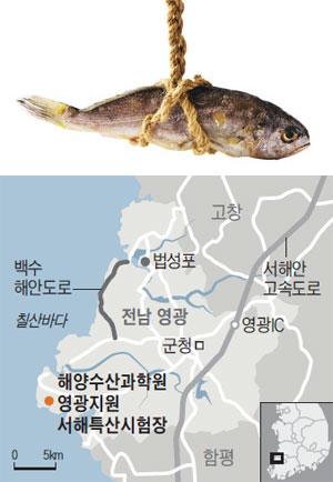 해양수산과학원 영광지원 서해특산시험장