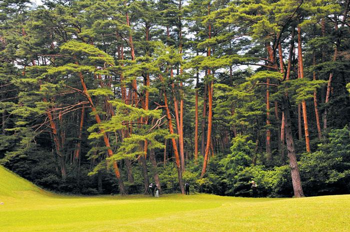 삼척시와 삼척동해태백산림조합이 힐링 숲으로 조성할 예정인 삼척시 미로면 활기리 일대 금강송 군락지.