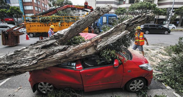 제9호 태풍 니삿(Nesat)이 30일(현지 시각) 대만 타이베이를 휩쓴 가운데 청소원들이 뿌리째 뽑힌 나무가 승용차를 덮친 현장을 치우고 있다.