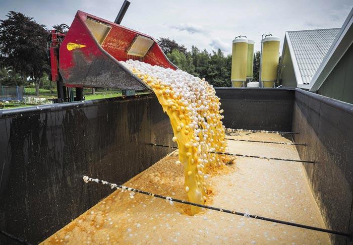 네덜란드 당국이 지난 3일(현지 시각) 살충제'피프로닐'성분이 검출된 달걀을 무더기로 폐기 처분하고 있다.