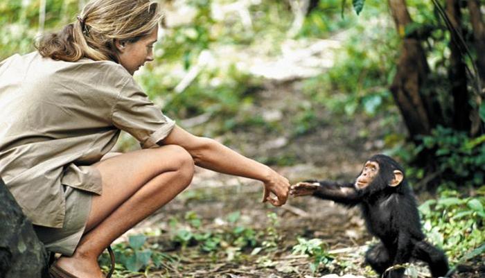 어린 침팬지 '플린트'와 인사하는 연구 초창기의 구달 박사. '제인 구달, 침팬지와 함께한 50년' 중에서.
