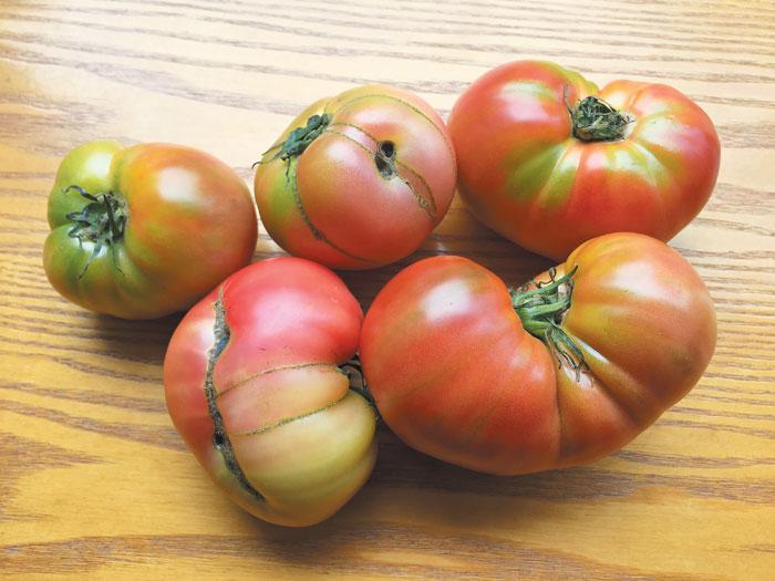 국내 못난이 농작물 전문 업체 '파머스페이스'가 파는 울퉁불퉁한 토마토