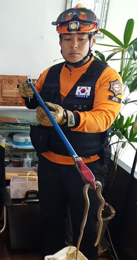 지난 6월 충남 계룡시 금암동에서 소방대원이 한 레스토랑에 들어온 길이 60㎝의 뱀을 포획하고 있다.