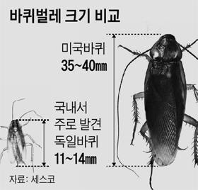 바퀴벌레 크기 비교표