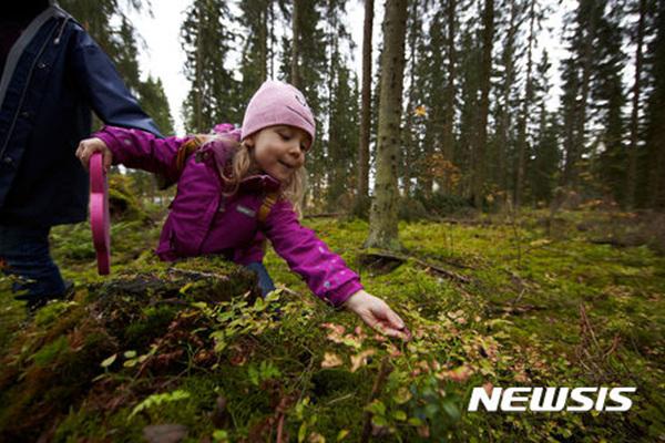 가을 어느날 한 핀란드인 소녀가 숲에서 식용버섯을 채집하고 있다.