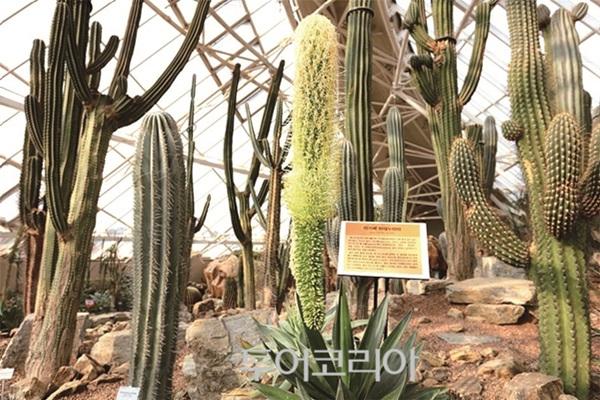 국립생태원 에코리움 사막관