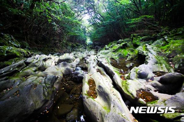제주 서귀포시 남원읍 '머체왓 숲길'.
