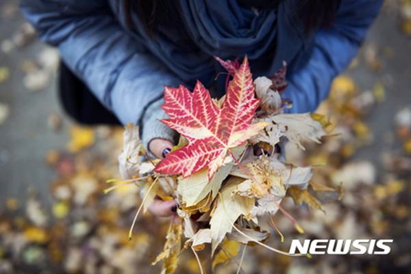 캐나다 단풍잎.