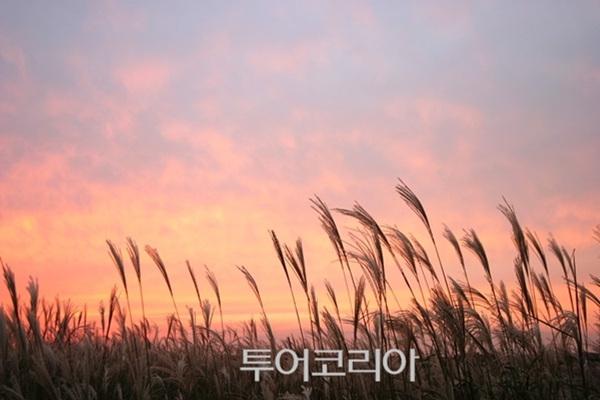 정선 민둥산 억새 풍경