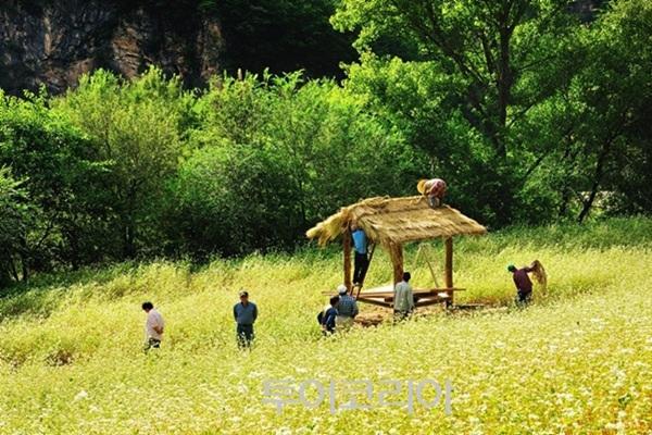 동강메밀꽃축제
