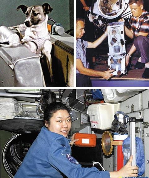 (왼쪽 위)1957년 우주로 간 첫 동물 '라이카', (오른쪽 위)1959년 우주서 귀환한 원숭이 '에이블', (아래)국제 우주 정거장에서 초파리 실험한 한국 첫 우주인 이소연 박사.