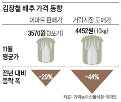김장철 배추 가격 동향
