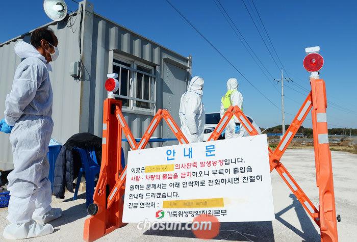 19일 가축위생방역지원본부 관계자들이 조류인플루엔자(AI) 바이러스가 검출된 전북 고창의 한 오리 농가로 가는 길을 통제하고 있다.