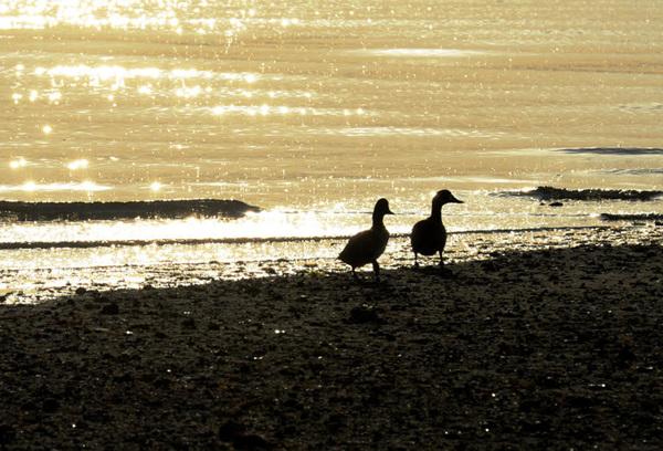 금빛으로 빛나는 남해바다