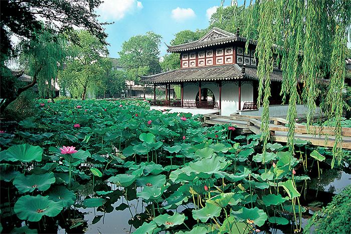 졸정원 연못 위 아름답게 피어 있는 연꽃.