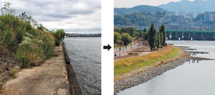 서울시가 용산구 이촌한강공원 강변을 덮고 있던 콘크리트(왼쪽)를 걷어내고 돌과 흙으로 이루어진 자연형 호안을 조성했다.
