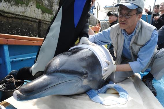 지난 2012년 7월, 돌고래 '제돌이'를 제주 앞바다에 놓아주었다./사진 제공=메디치
