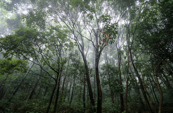 완도수목원 난대숲.