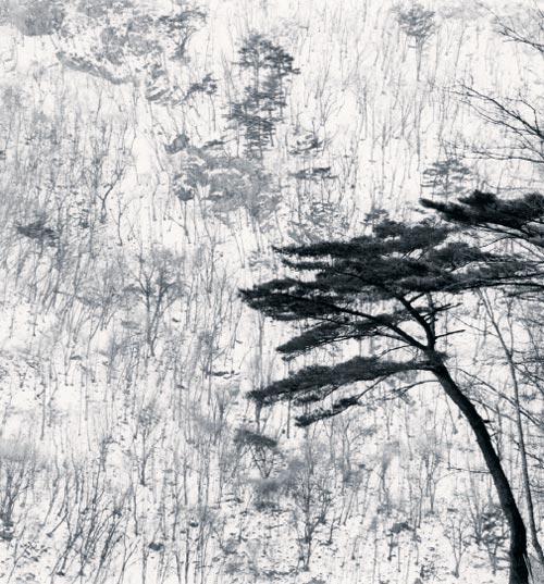 2012년 강원도 평창의 겨울 풍경을 담은'산행'.