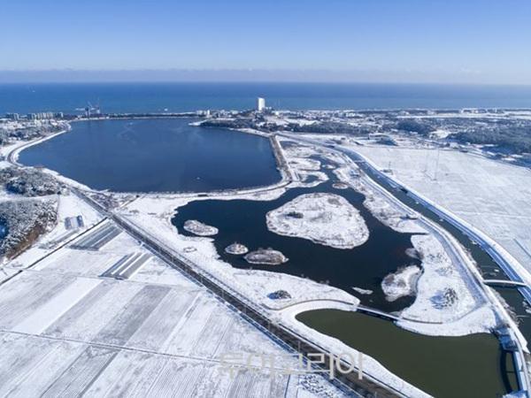 경포가시연습지 겨울 풍경