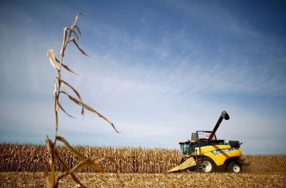 미국 일리노이주의 한 옥수수 농장. /로이터연합뉴스