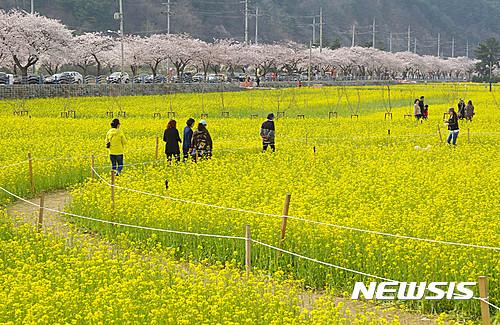 유채꽃축제 등 오감 만족 행사가 기다리는 4월의 삼척!