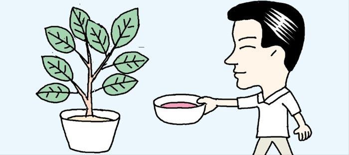 [리빙포인트] 고기 담근 핏물, 관엽식물에
