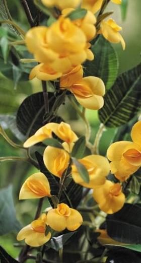 남아프리카공화국 케이프타운 해안에서 주로 자라는 꽃 '허니부쉬'.
