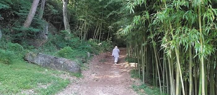 부산 금정구 범어사 대숲길 모습.
