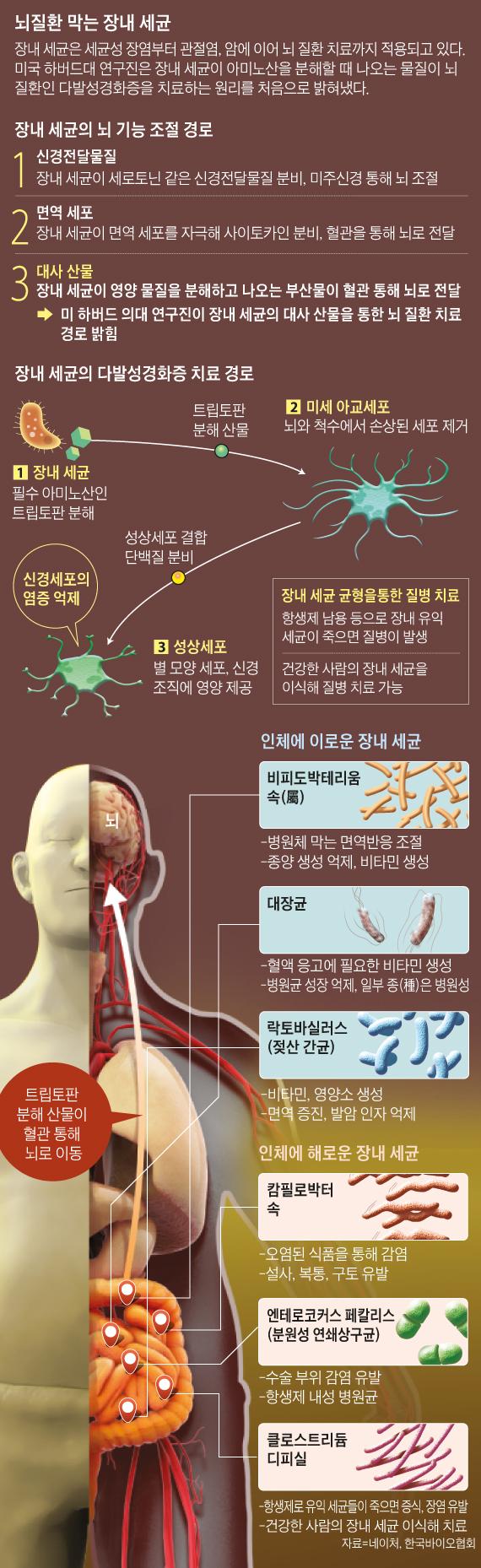 뇌질환 막는 장내 세균
