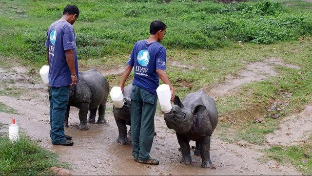 [Al jazeera] Kaziranga park fights to save India's endangered one-horned rhino