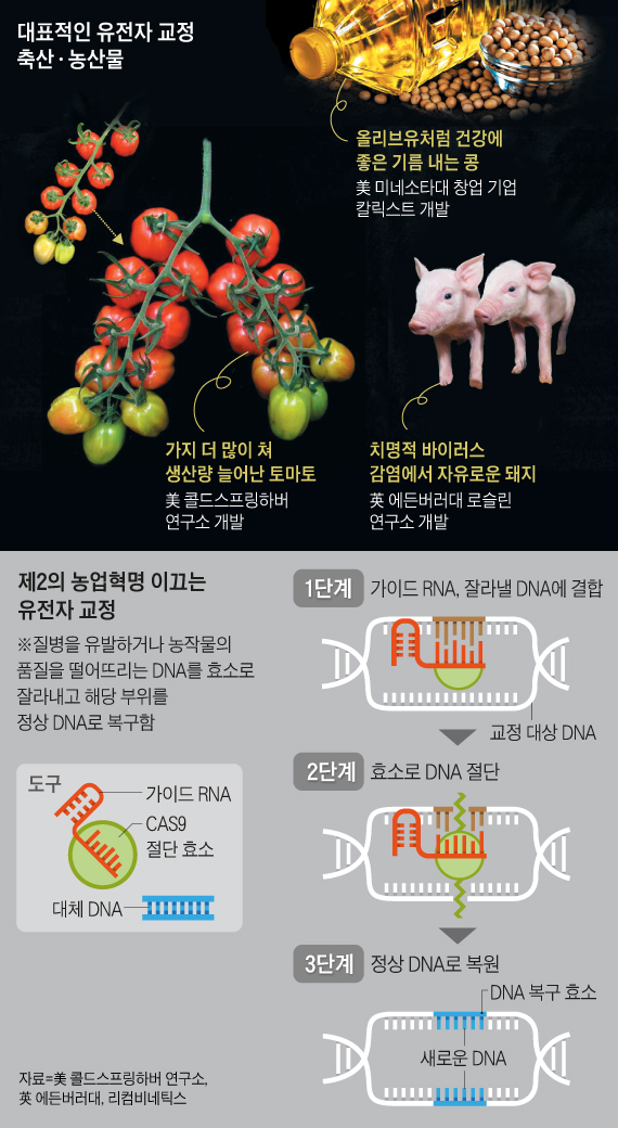 대표적인 유전자 교정 축산·농산물