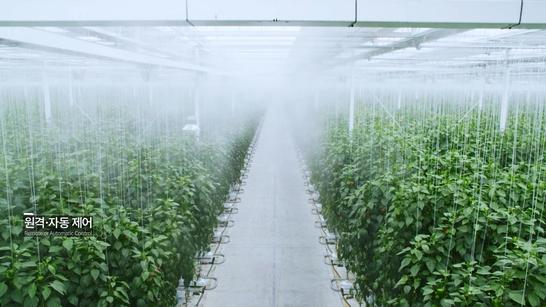 미미스마트팜씨티에게 들어설 스마트팜. 농장관리는 충남 부여에서 국내 최대 규모의 스마트 팜을 운영하는 우듬지팜에서 맡기로 계약을 체결했다. /우듬지팜 제공