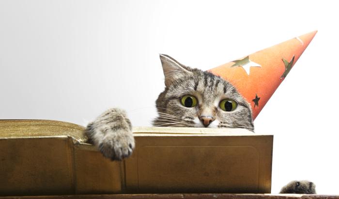 고양이의 매력이 출판 시장을 점령하고 있다. 베르나르 베르베르의 '고양이'에 이런 문장이 있다. '고양이의 생각: 인간은 나를 먹여주고 지켜주고 사랑해 준다. 인간에게 나는 신이 분명하다.'