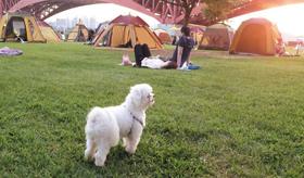 당신에게만 '귀여운 개'입니다 서울의 한 한강공원에서 강아지 한 마리가 목줄을 하지 않고 돌아다니고 있다.