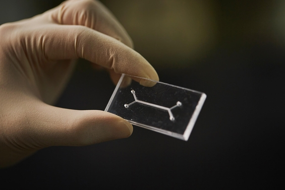UNIST가 개발중인 생체 장기 모사 칩. 한쪽은 혈관, 다른 쪽은 채널이다. /UNIST 제공.