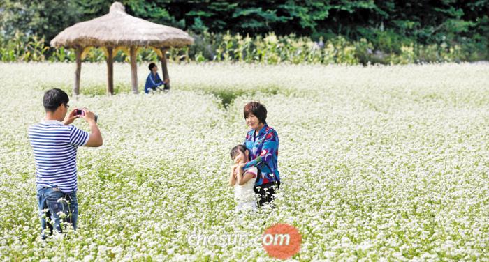 강원도 평창군 봉평의 메밀꽃밭에서 관광객들이 기념사진을 찍고 있다.