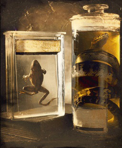 동물 사체를 보존하는 방부 용액에 들어 있는 '포름알데히드'가 담배 연기에도 들어 있다고 알려주는 이미지.