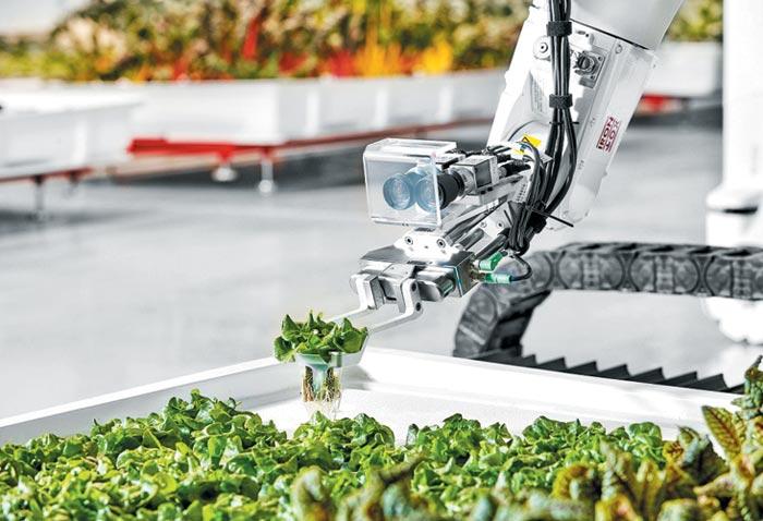 미국 캘리포니아주 샌카를로스의 아이언옥스 농장에서 로봇이 상추를 키우고 있다.