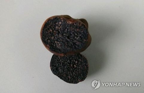 '검은 다이아' 송로버섯 추정 버섯류, 임실서 발견