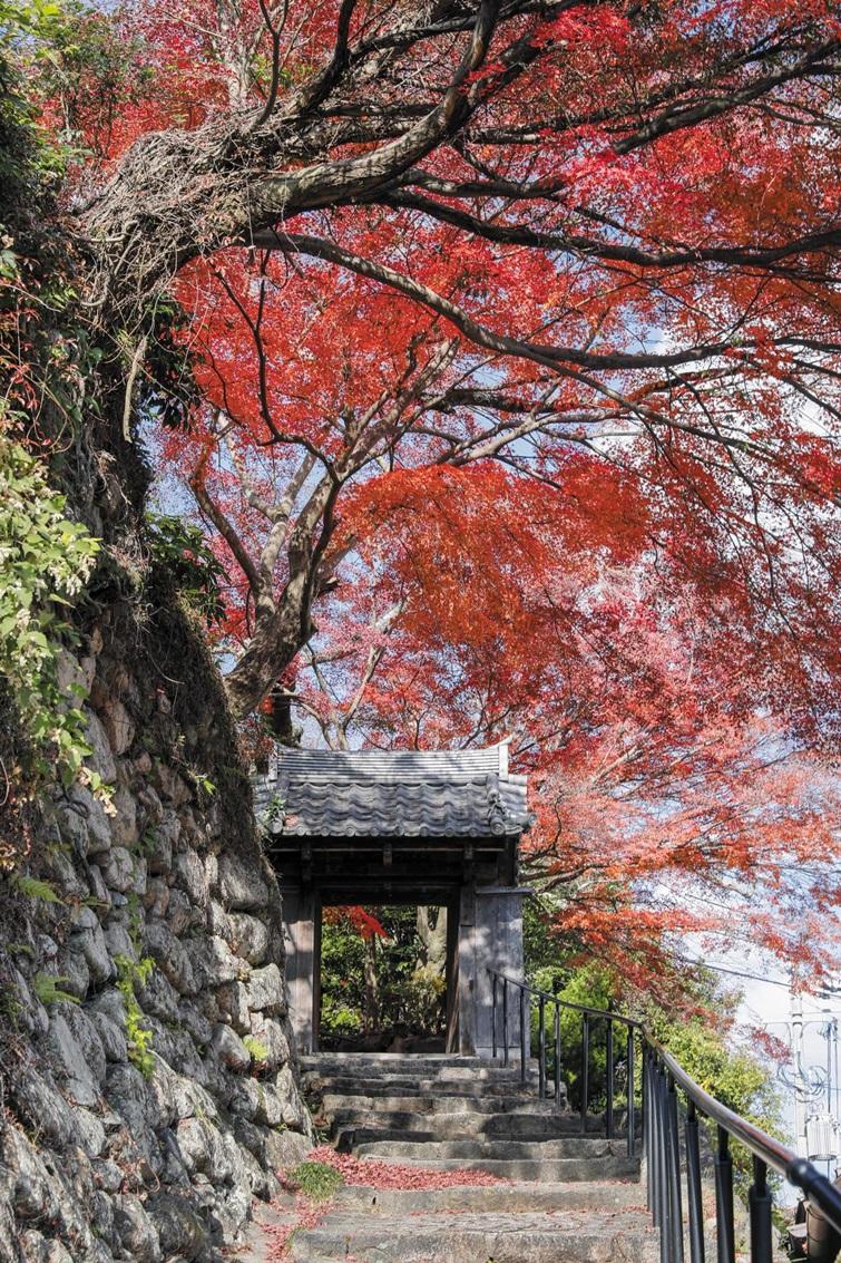 일본 효고현 고베시에 있는 가장 오래된 온천 마을 '아리마 온천'. 1300여 년의 역사만큼 오래된 단풍나무가 멋스럽다