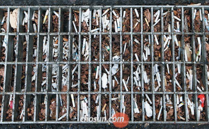 21일 오전 서울 종로구의 한 치킨집 앞 하수구에 담배꽁초 수백 개가 버려져 있다.