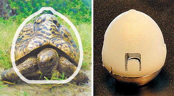 거북 등딱지처럼 뒤집혀도 바로 서는 알약 - 먹는 인슐린 주사제(오른쪽)는 뒤집혀도 바로 서는 거북 등딱지 모양으로 만들어 몸 안에서 항상 같은 형태로 서 있을 수 있다.