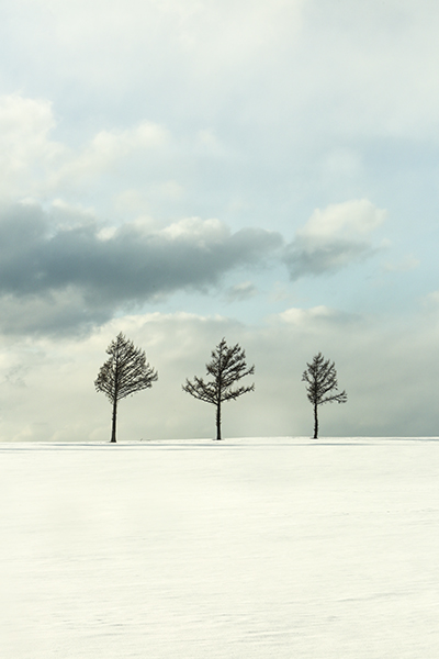 [포토]순백의 고장, 홋카이도의 겨울매력