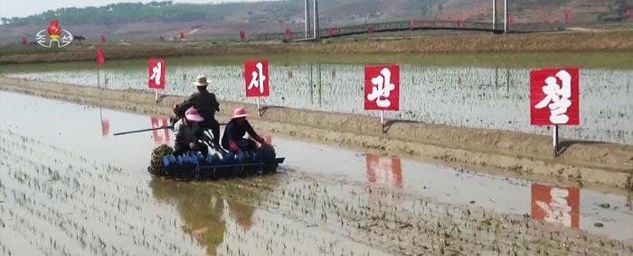 북한 평안남도 평원군 원화리 원화협동농장에서 올해 첫 모내기가 시작됐다고 조선중앙TV가 11일 보도했다.